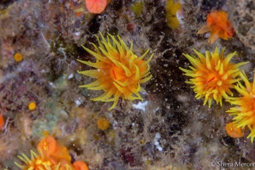 Alohi Kai cup coral polyps 2