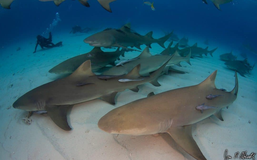 Why Sharks? Some Thoughts About The Ocean