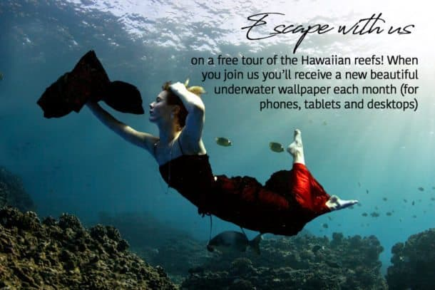 escape opt in wallpaper